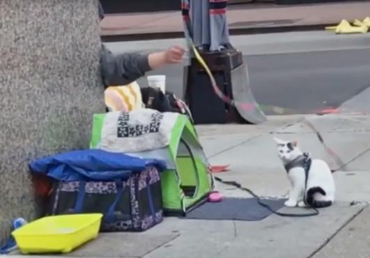노숙자 고양이