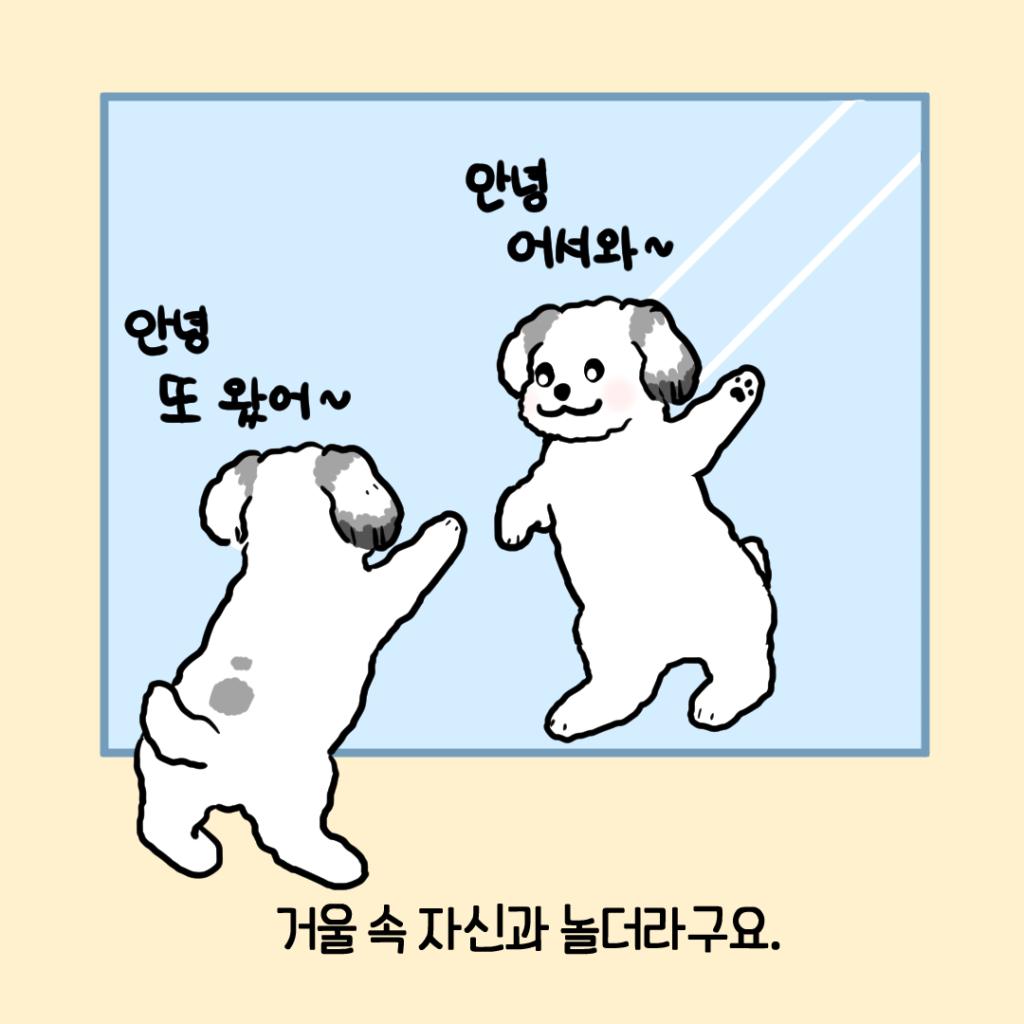 강아지 거울