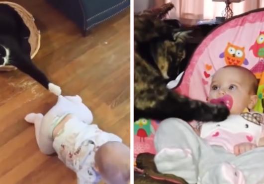 고양이와 아기