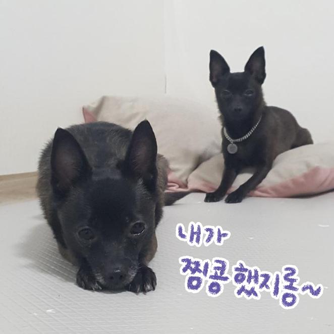 강아지 마킹 입양