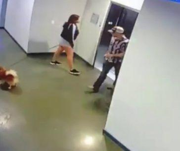 강아지 사고