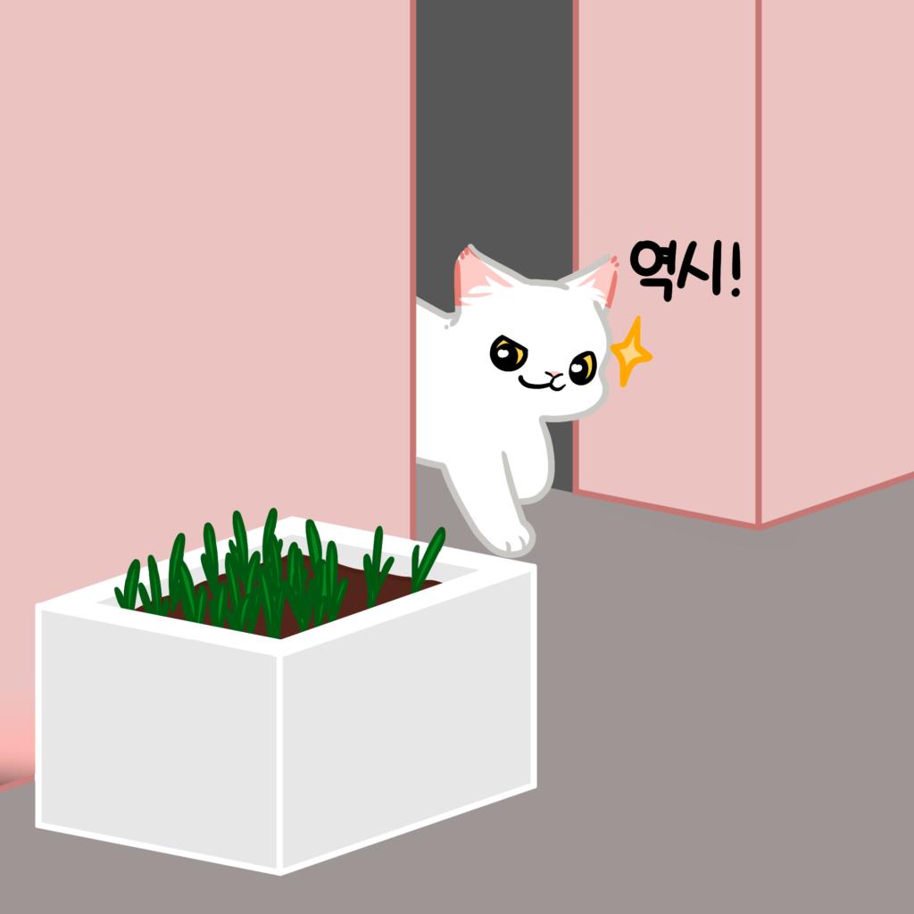 고양이 캣닢