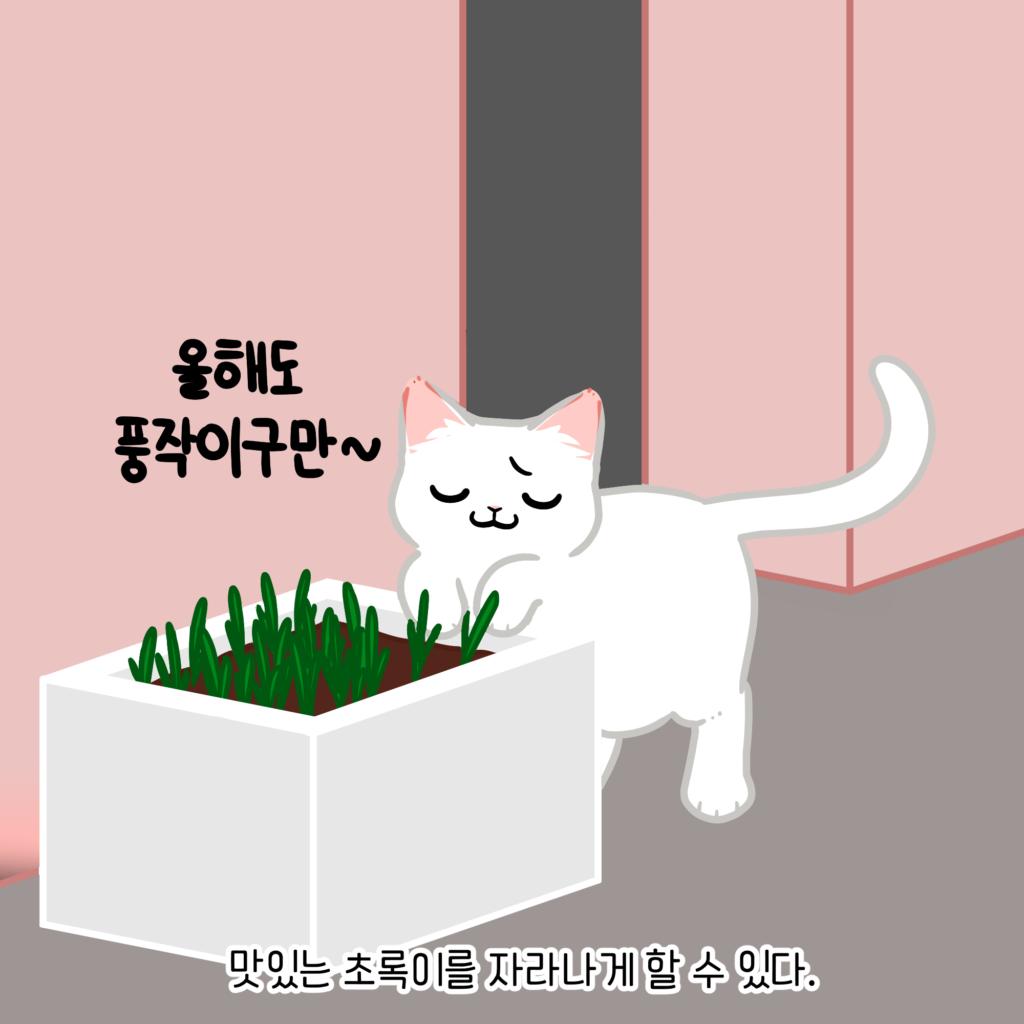 고양이 귀리