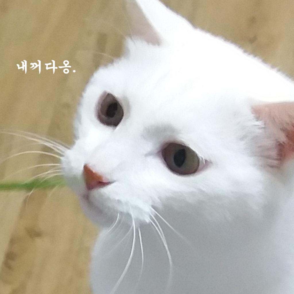 고양이 정색