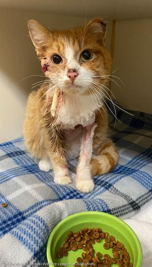 큐피드는 밥을 잘 먹고 있어서, 수술 부위 감염을 이겨낼 것으로 기대됐다.