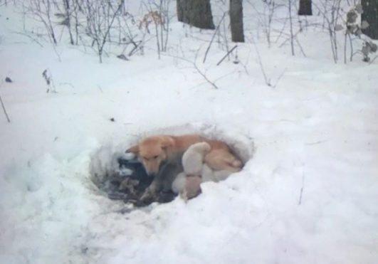 강아지 눈