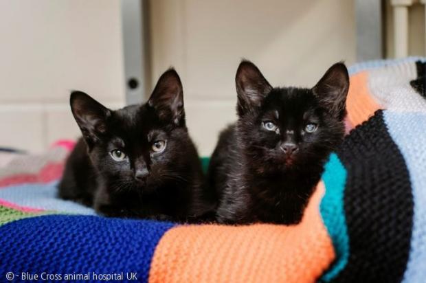 시각장애 고양이 스펙스(오른쪽)와 형제 닷.