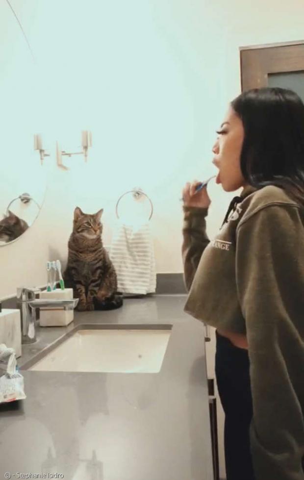 이 닦는 집사를 바라보는 고양이 아킬레스.