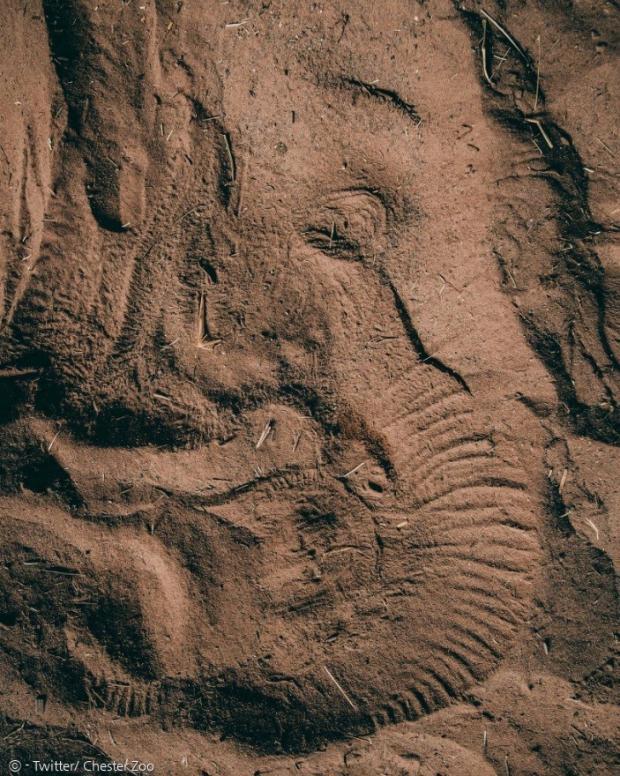 아기코끼리 앤전의 잠든 얼굴 자국이 진흙 바닥에 남았다.