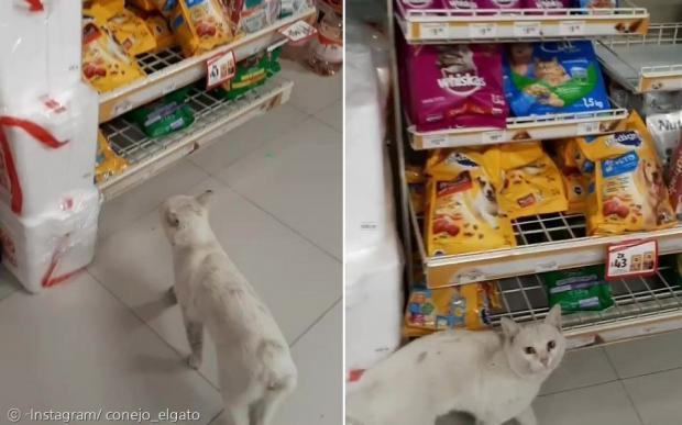 고양이 코네호가 교사를 고양이 매대로 이끌고 가서, 애처로운 눈빛으로 교사를 바라봤다.
