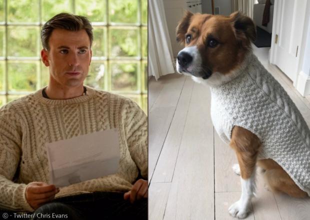 지난해 12월 크리스 에반스와 커플 스웨터를 입은 반려견 다저.