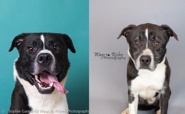 지난 2016년 찍은 그레이의 사진(왼쪽)과 2020년 그레이 사진(오른쪽).