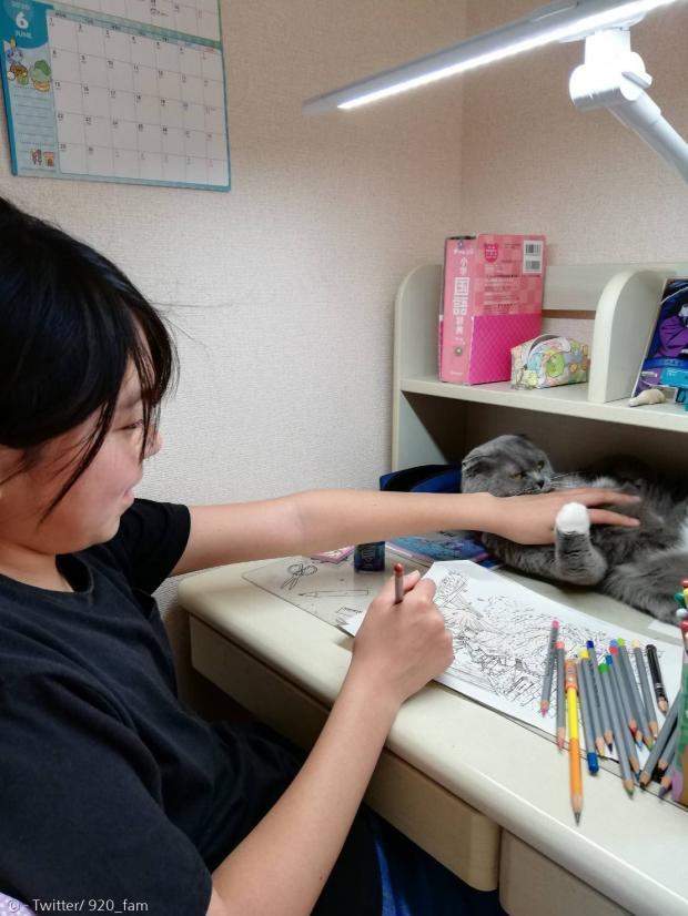 어린 집사의 숙제를 방해하는 고양이 카린.