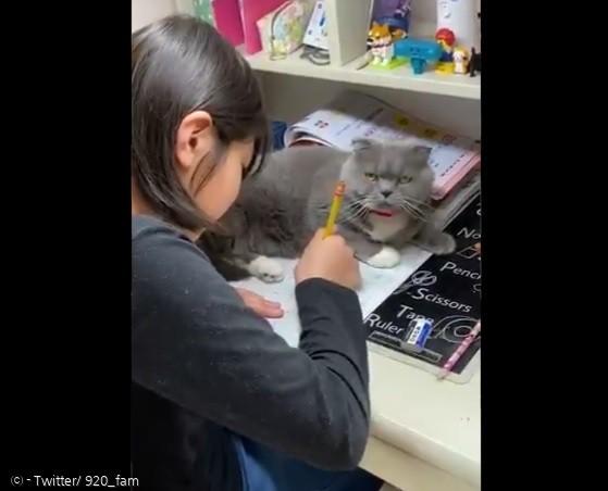 엄마를 향해 레이저를 쏘는 고양이 카린.