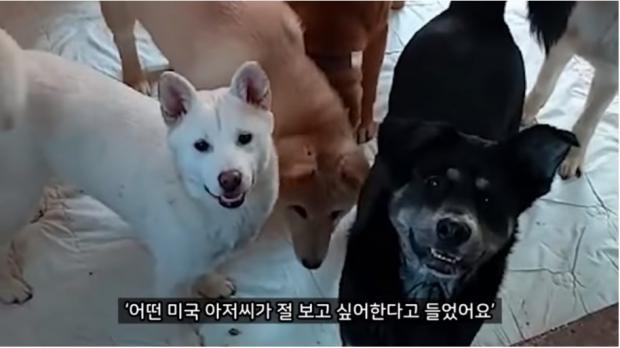 ⓒ노트펫 유튜브 올리버쌤 캡쳐