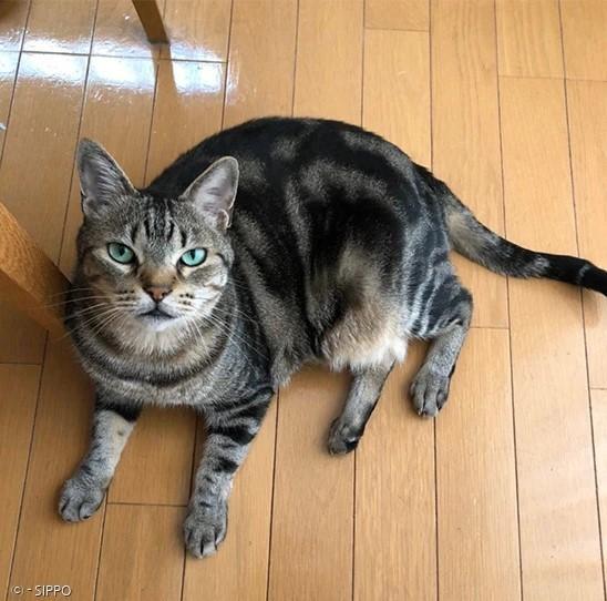 집사 키모토의 고양이 아메는 초록빛 눈을 가진 예쁜 고양이다.