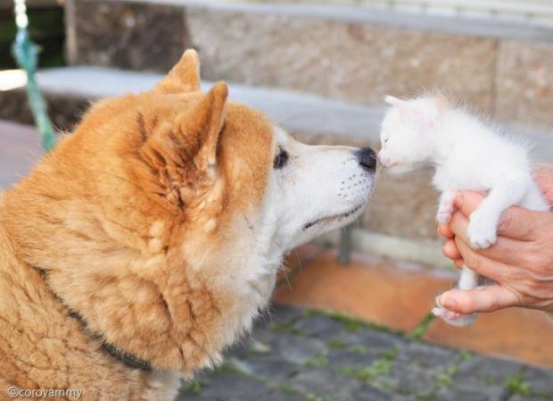 강아지 하치오와 아깽이 노비타.