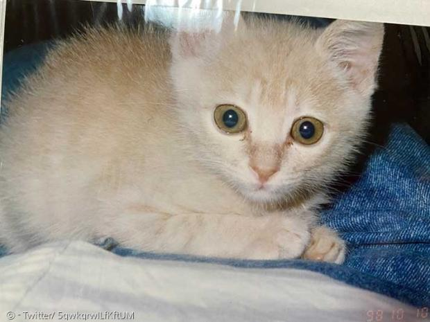 중년 부부의 집에 온지 한 달 된 아기 길고양이.