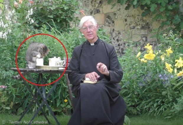 로버트 윌리스 주임사제가 온라인 설교를 하느라 아침 홍차를 마시기 전에 고양이 타이거(빨간 원)가 몰래 홍차에 탈 우유를 맛봤다.