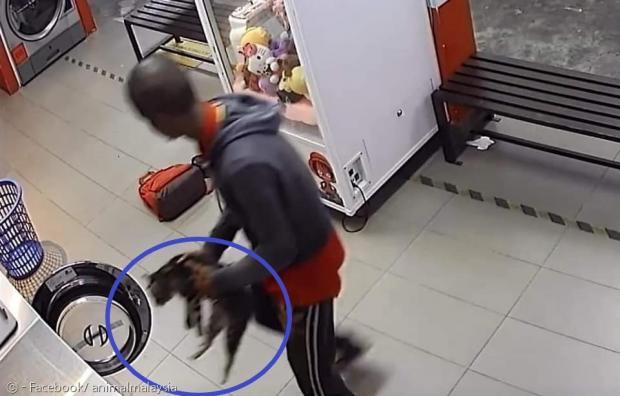 30대 남성이 지난 12일 새벽 5시경 빨래방에서 길고양이 3마리(파란 원)를 세탁기에 넣어 익사시킨 죄로 체포됐다.