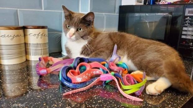 고양이 에이버리가 물안경 8개를 훔쳐서, 집사에게 선물했다.