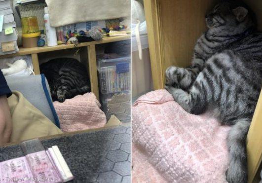 지로리는 원래 도둑고양이였지만, 이제 아사쿠사 연예홀 매표소에서 숙식을 해결하는 직원이다.