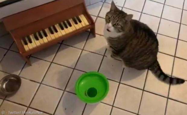 윈슬로는 어릴 때부터 피아노에 재능을 보였다.