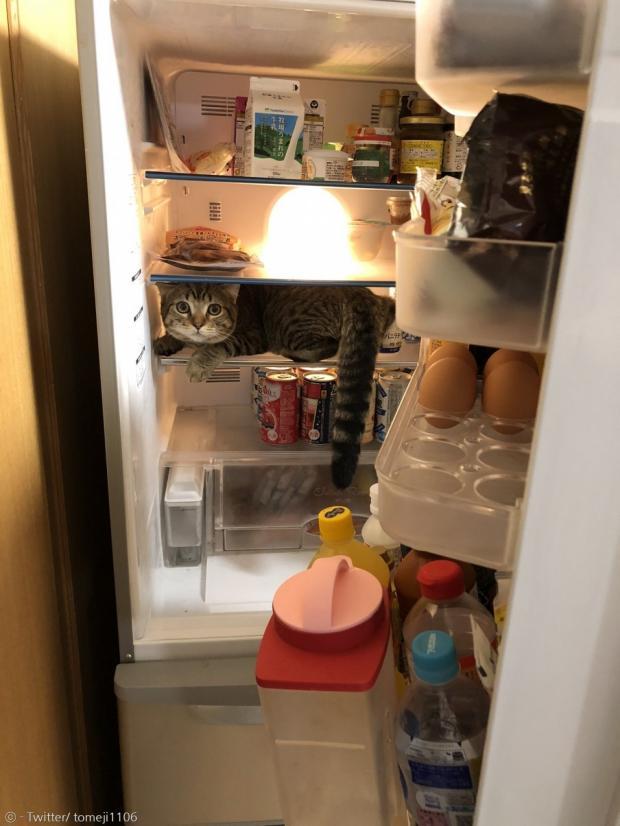 집사가 냉장고 문을 열고 냉장고 안에서 고양이 갓짱을 발견하고 깜짝 놀랐다.