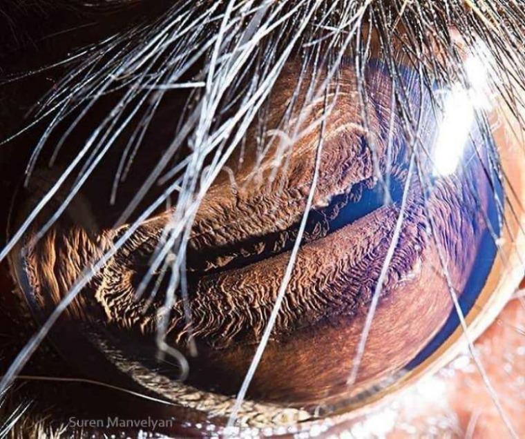 batch_12. 사슴.jpg