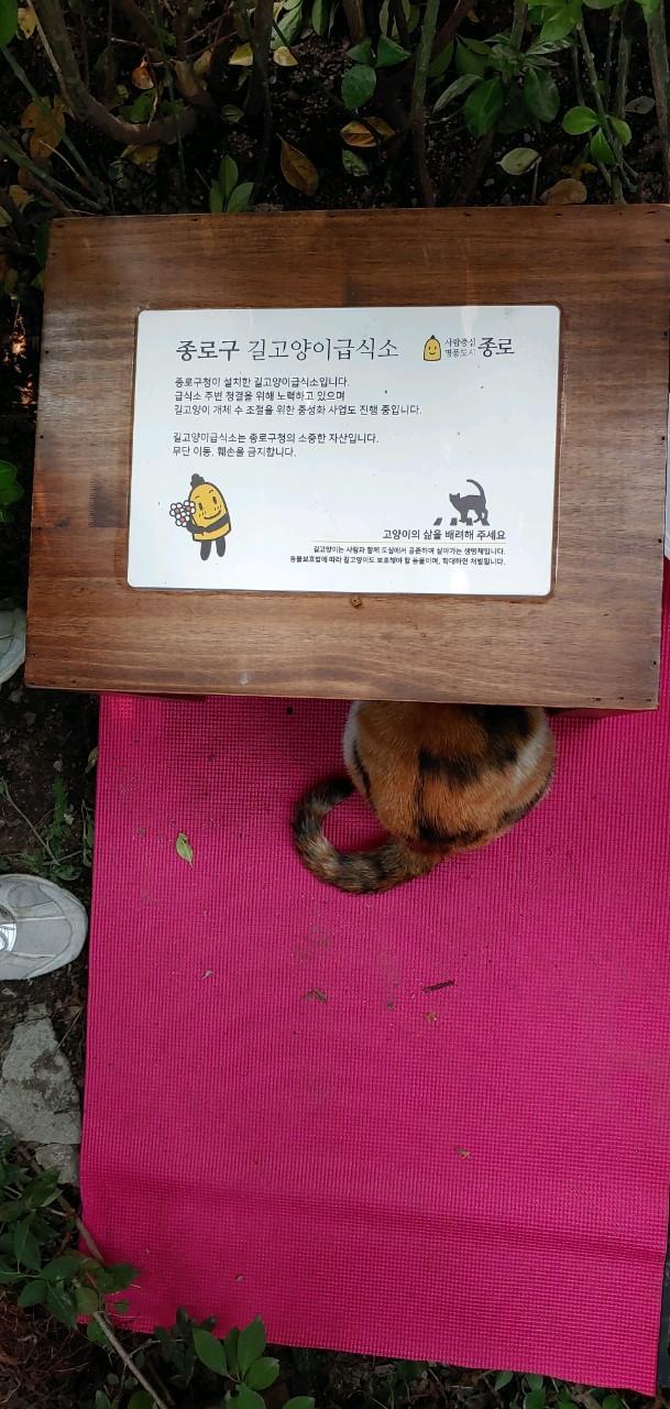 종로구 길고양이 급식소. 종로구는 2016년 서울 지자체 두번째로 급식소를 설치했고 종로구 캣맘협의회의 활발한 참여 덕분에 현재 20개소 넘는 급식소를 운영하고 있다.