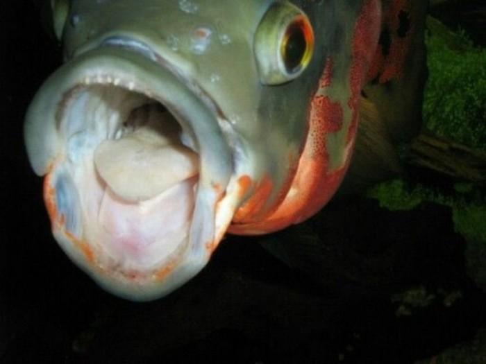 batch_10 오스카 물고기.jpg