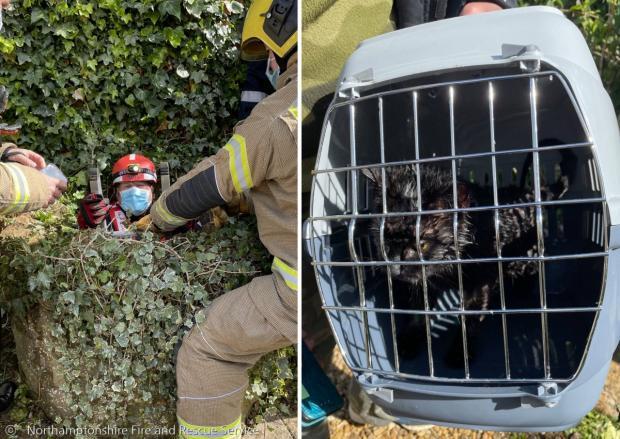 한 소방관이 사다리를 타고 우물 안으로 들어가서 검은 고양이 플리를 구조했다.(왼쪽 사진) 오른쪽 사진은 구조 직후 플리의 모습이다.  [출처: 영국 노샘프턴셔 소방서]