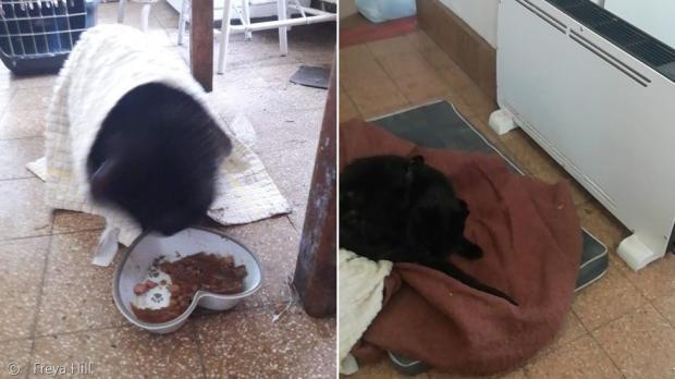 구조된 플리가 밥을 먹고 난방기 옆에서 휴식을 취했다.