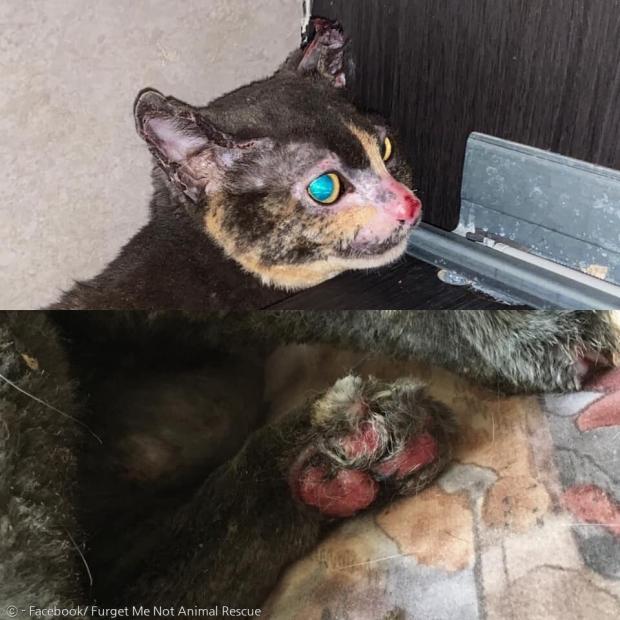 민카는 귀와 코 그리고 발바닥(아래 사진)에 심한 화상을 입었다. 사진은 없지만 배에도 화상을 입었다고 한다.